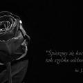 rose-1460773_640
